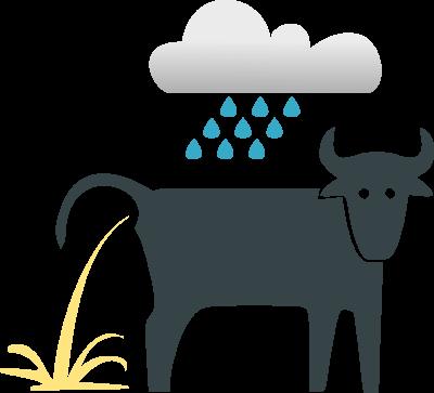 Il pleut comme vache qui pisse