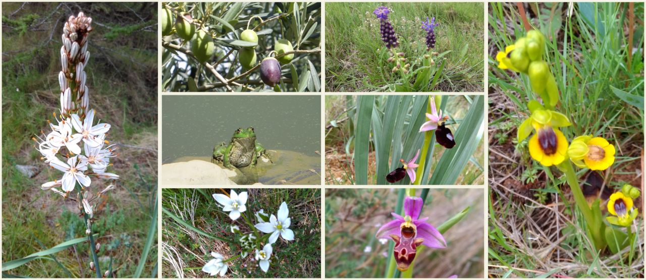 French lessons in the middle of the Languedoc fauna and flora