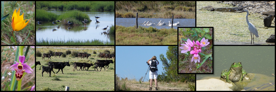Observing wildlife diversity