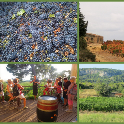 Wine touring and tasting