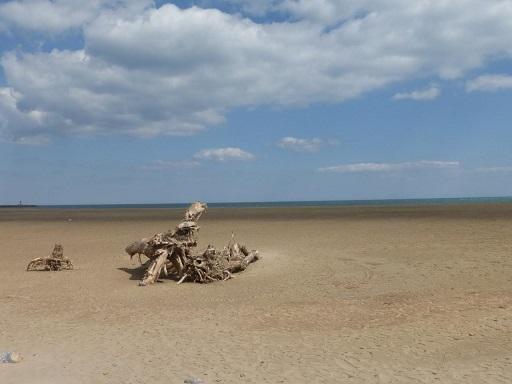 Bois flotté sur la plage des chalets