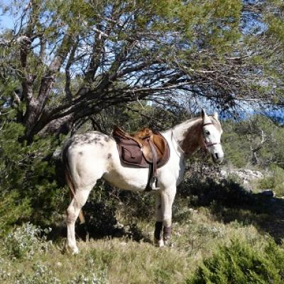 Mejora tu francés, monta a caballo y disfruta de la naturaleza en el parque de Narbonne