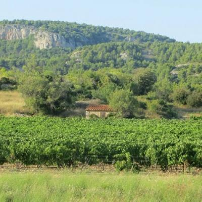 French courses and languedoc wine