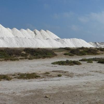 Learn French and discover salt harvest in Gruissan