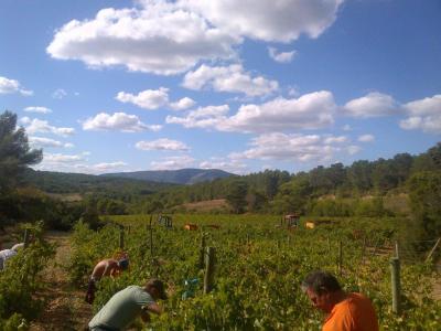 Découvrir la taille des vignes et suivre des cours de français