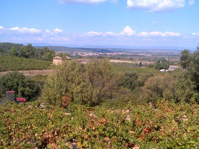 Learn french and discover wine of languedoc