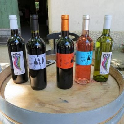 Learn french and taste wine