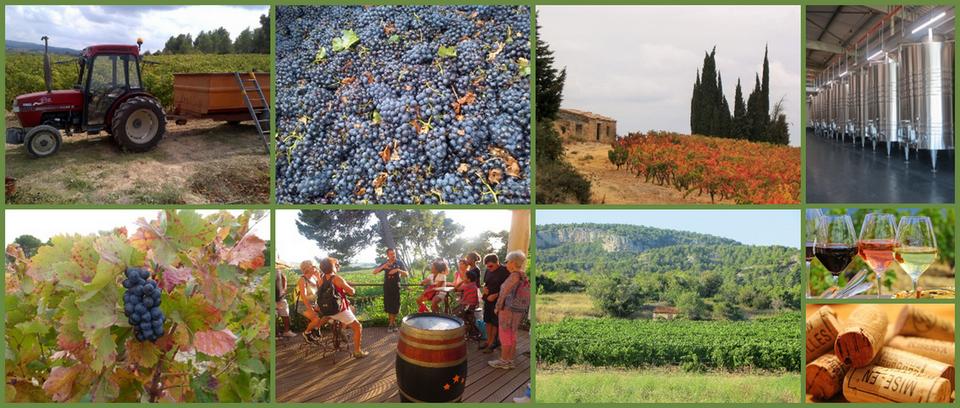 Visitar viñedos y degustar el vino